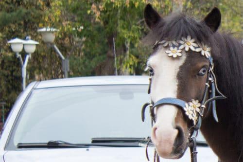 Unfall zwischen einem Fahrzeug und einem auf der Straße befindlichen Pferd